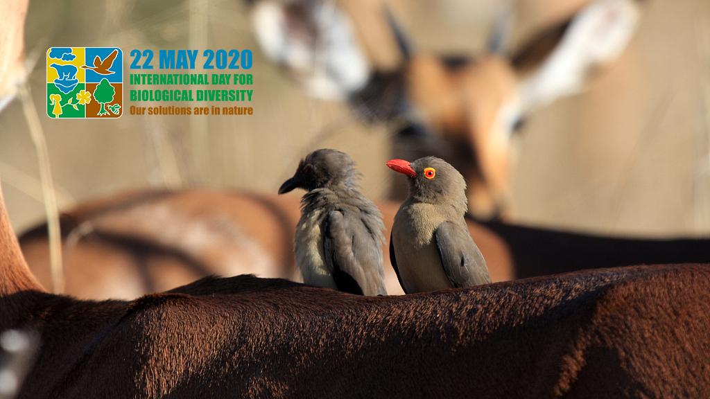 Intl Day of Biodiversity