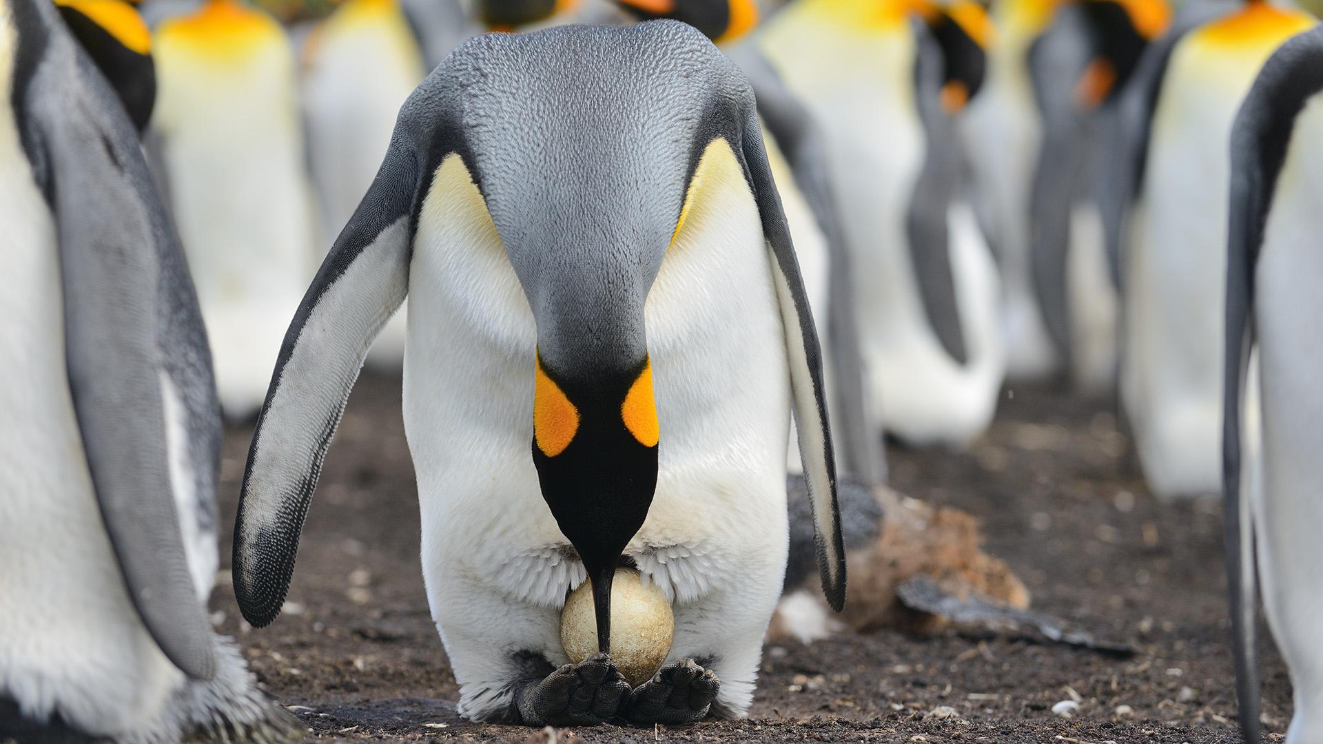 фото пингвинов с цветочками знаю почему