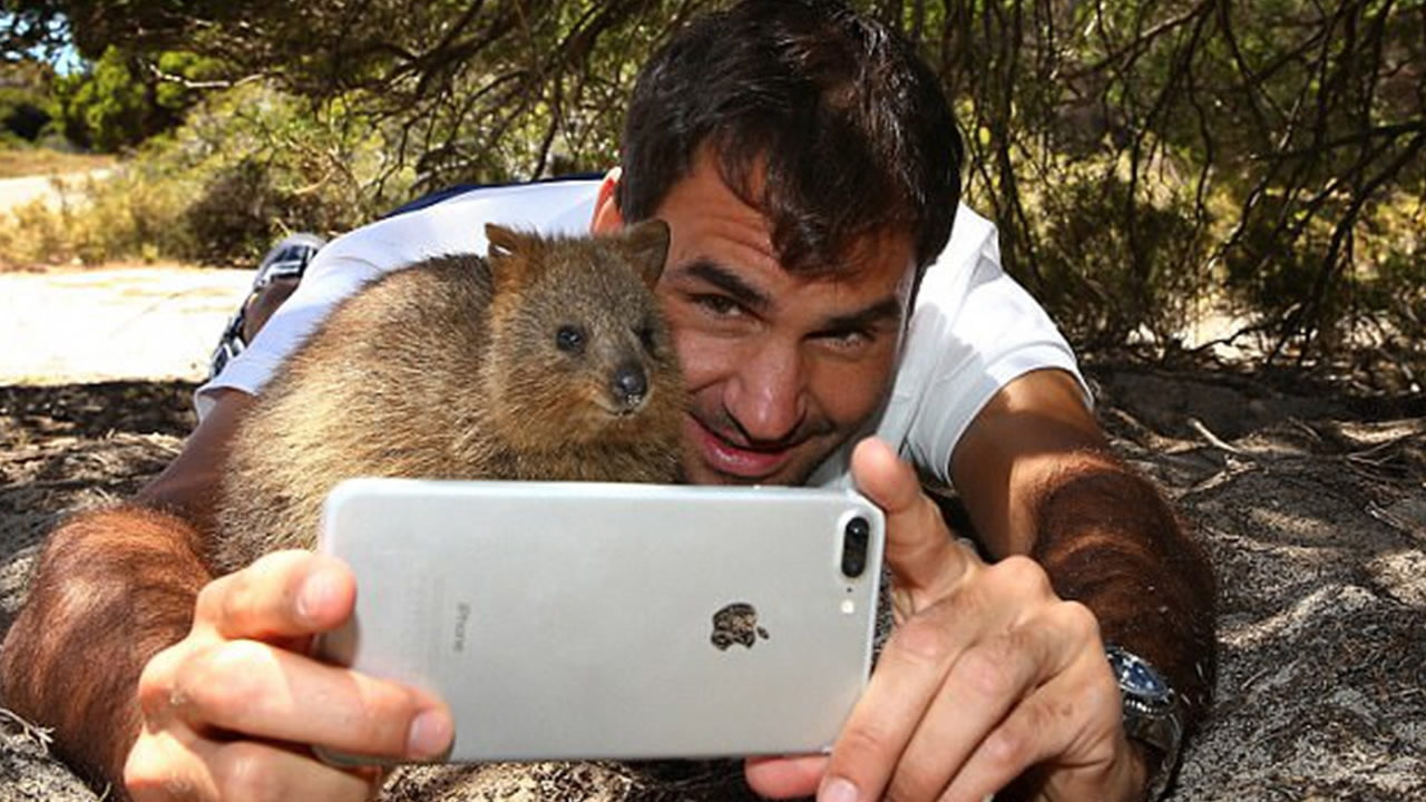 Roger Federer takes selfie with a Quokka on Rottnest Island in Australia