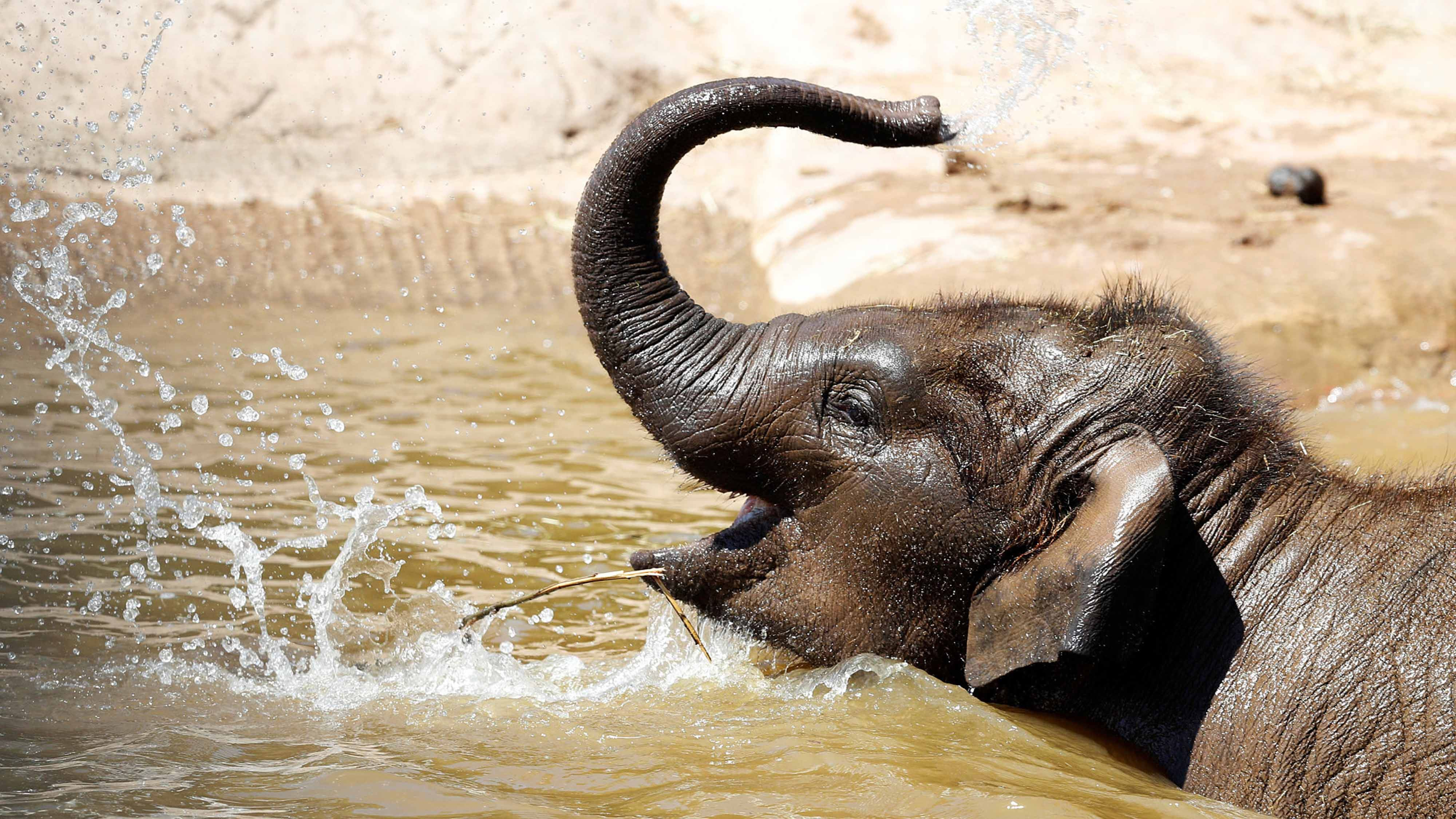 f0ecd5b13a7b World Elephant Day  Global consensus needed on ivory trade - CGTN