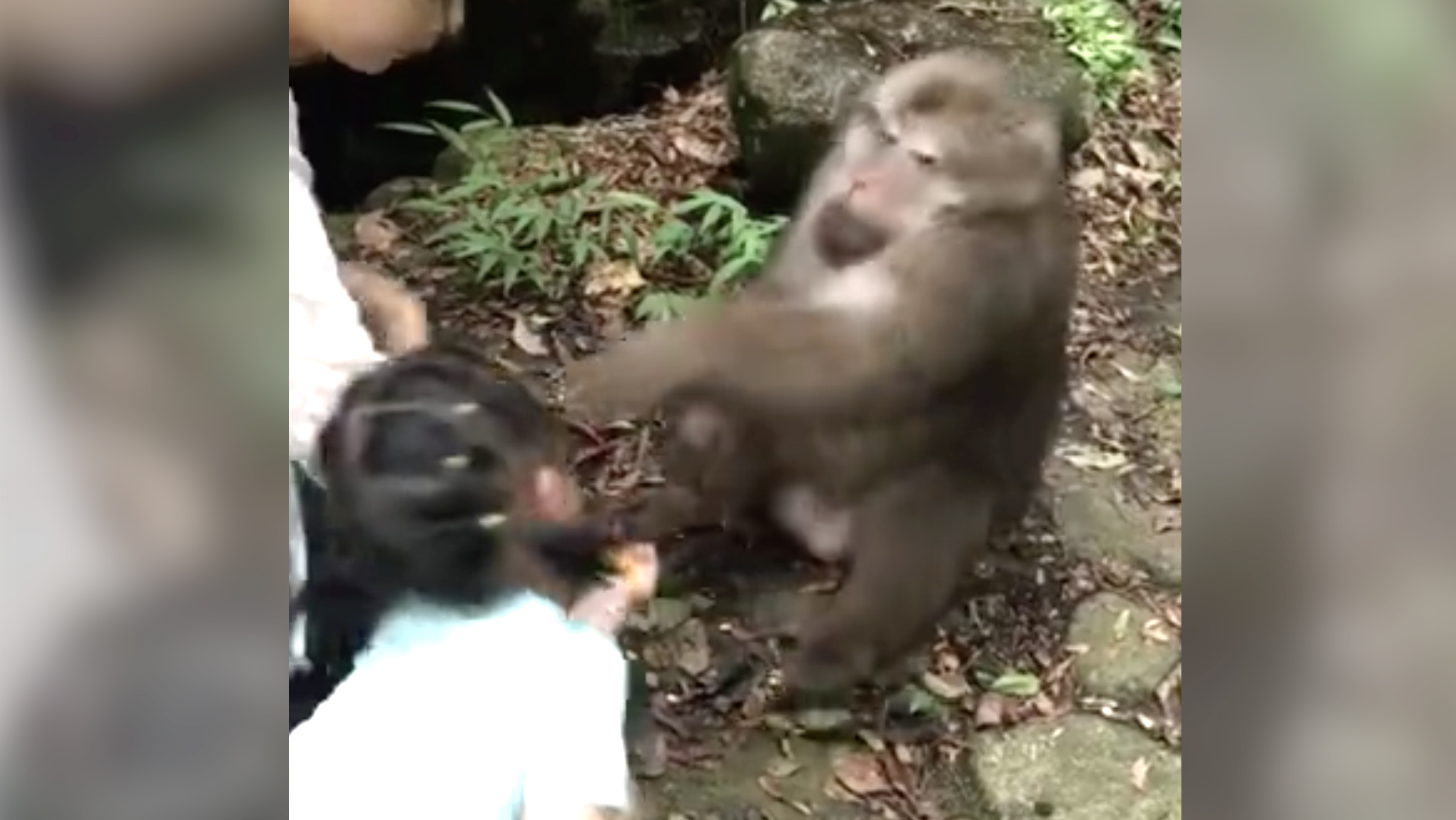 Chick fucks a chimp, denise milaninudepicture
