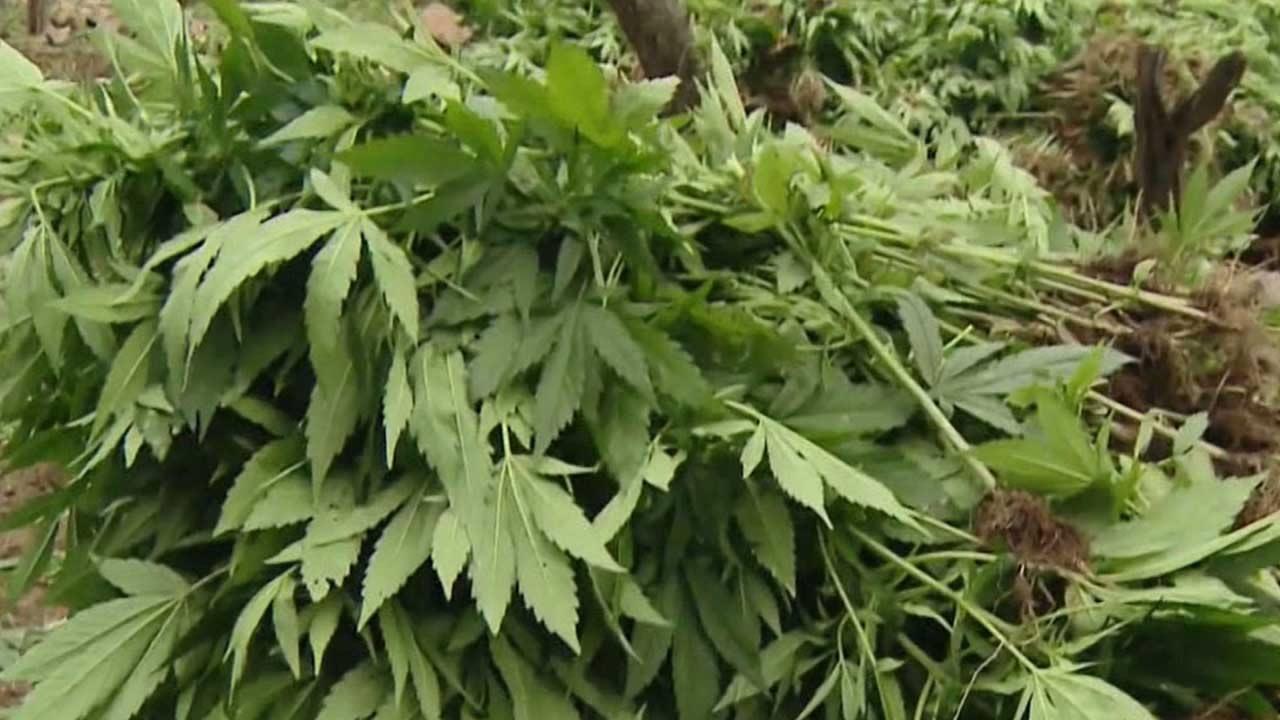 cf6f848e2a257 Advocates call for complete legalization of marijuana in Mexico